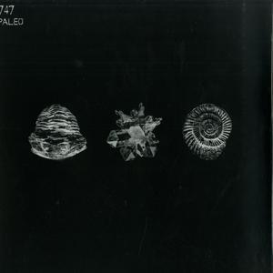747-Paleo / Aquaregia Records
