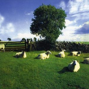 Klf-Chill Out